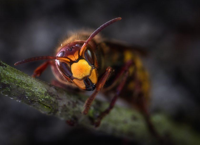 animal-antenna-bee-928966