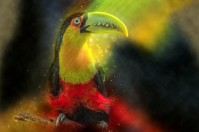 toucan-3273318_1920