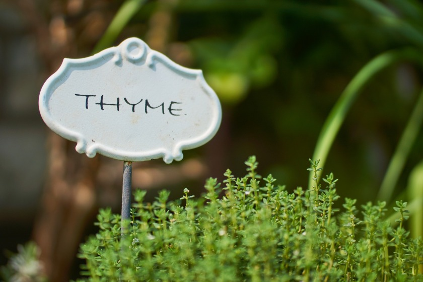thyme-2337214_1920