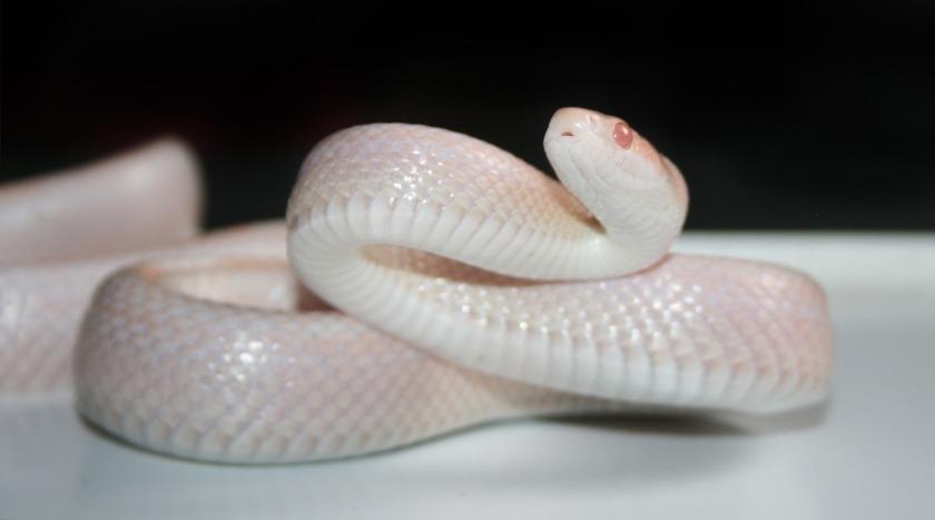 reptile-3179090_1920