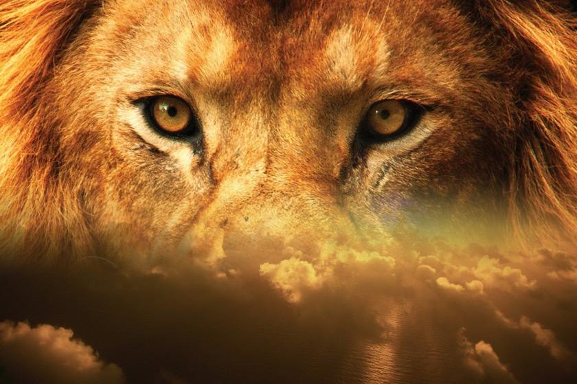 lion-2115592_1920